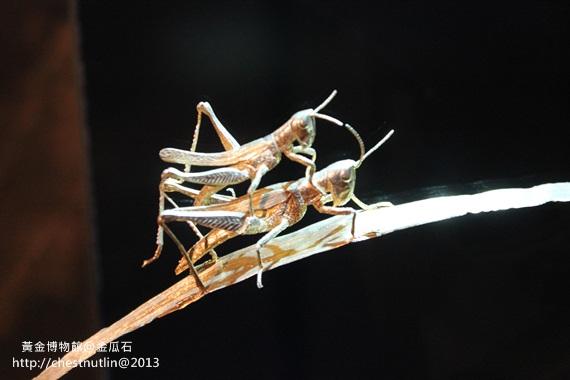 2013-03-10【金瓜石】昀妹妹同遊 (149).JPG