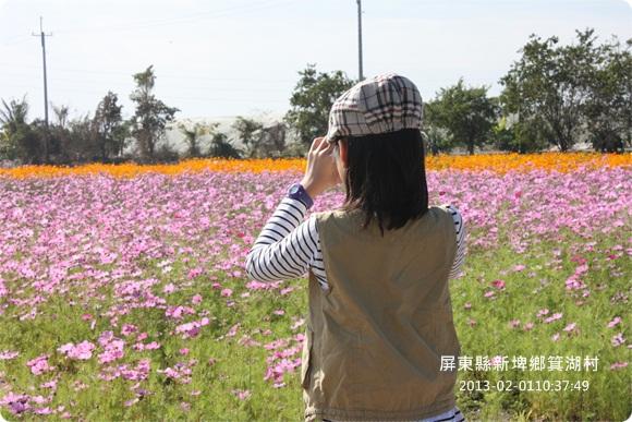 2013-02-01【箕湖村】美麗花海 (2).JPG