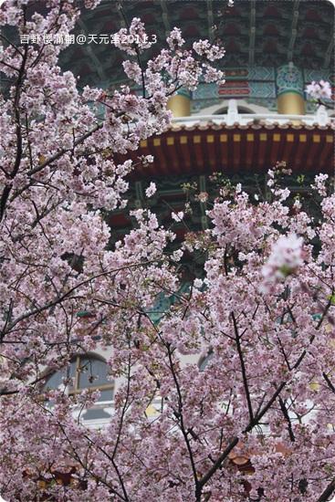 2011-03-13【天元宮櫻花】 (14).JPG