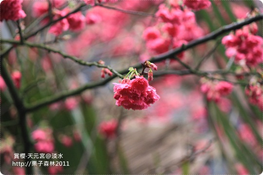 201100218-天元宮 (116).JPG