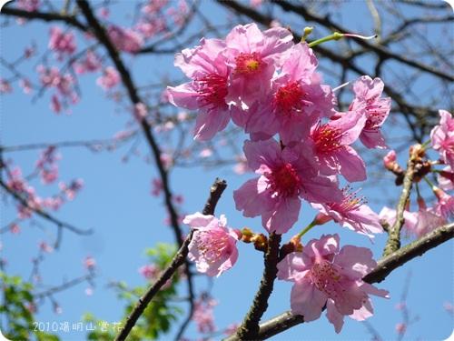 99-03-11陽明山花 (10).jpg