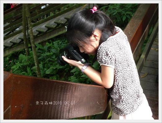 990501【南天母】桐 (53).jpg