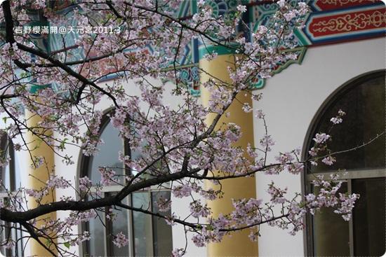 2011-03-13【天元宮櫻花】 (10).JPG