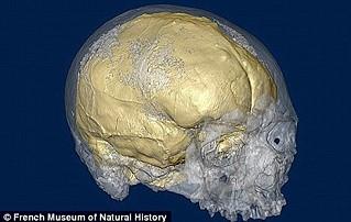 人類腦容量越來越小1.jpg