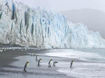無頭企鵝 抓癢3.jpg