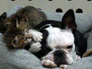 貓咪愛吃「狗耳朵」? 挑戰狗脾氣.jpg