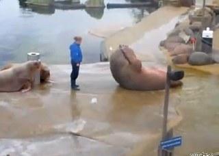 海豹會標準仰臥起坐.jpg