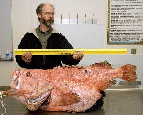 阿拉斯加 百歲老魚 157歲.jpg
