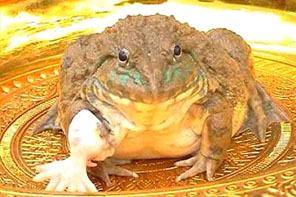 七腳青蛙.jpg