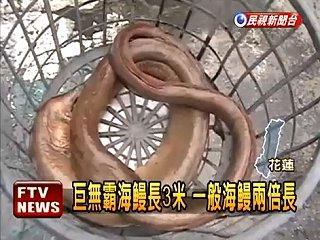 近三米巨鰻上鉤 釣客吃驚.jpg