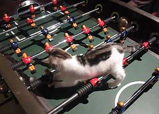 跟貓咪對打桌上足球1.jpg