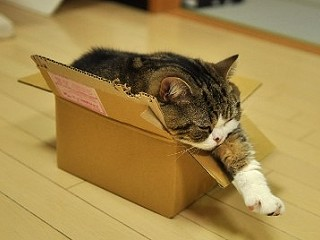 紙箱貓減肥失敗1.jpg