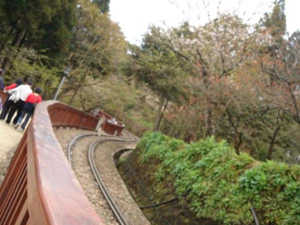 漫步在森林小徑和鐵軌上