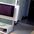 IMG0041A.jpg