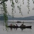 小舟與柳樹