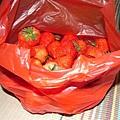 20RMB草莓