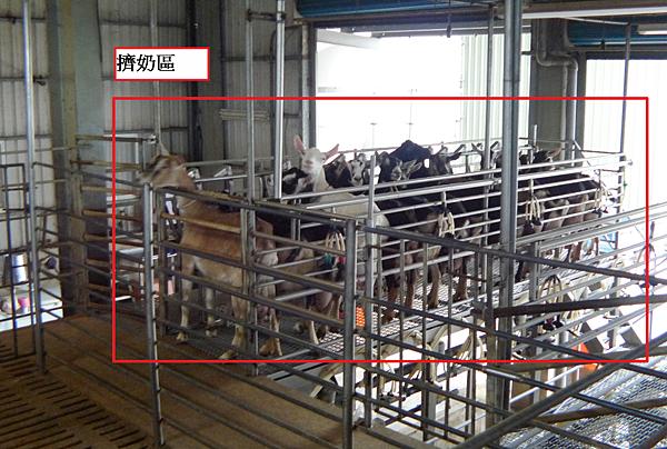 嘉南羊乳好喝的秘密,帶你去嘉南羊乳牧場瞧一瞧!