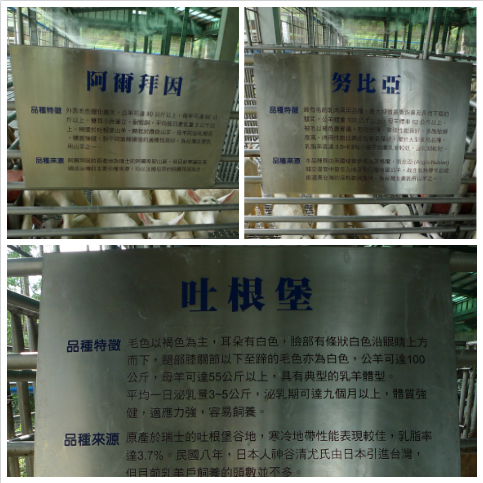 嘉南羊乳牧場9.png