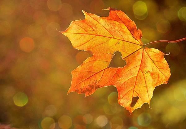 秋季補品1.jpg