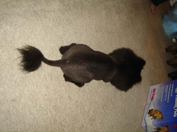 沒錯...是黑色的獅子