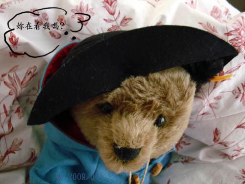 有熊出沒--你在看我嗎?