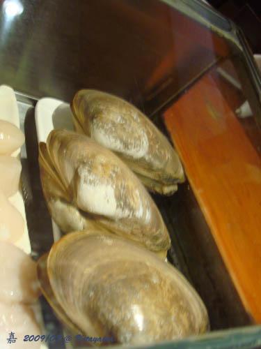 kitayama--jumbo clam