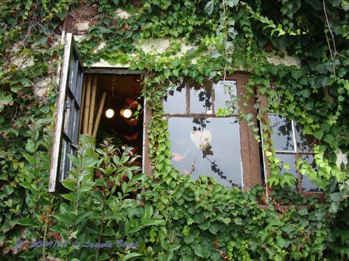 花店的側窗