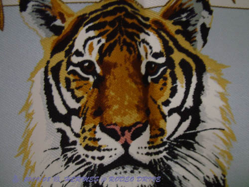 DSC02227-tiger face.jpg