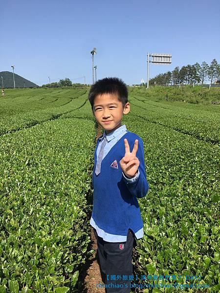綠茶博物館.jpg