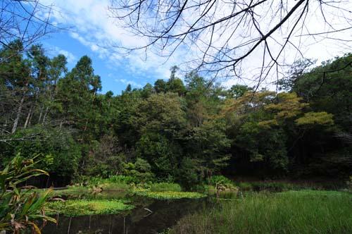 奧萬大生態池1