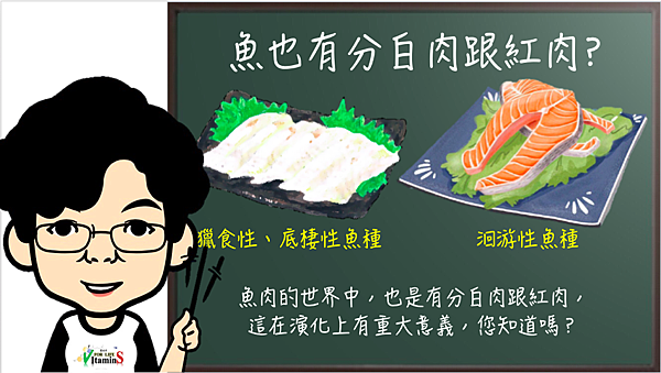 魚肉也有紅肉和白肉差別?.png