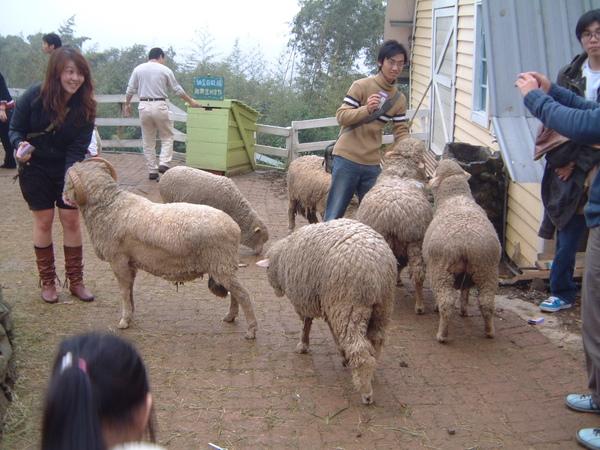 富野綿羊牧場