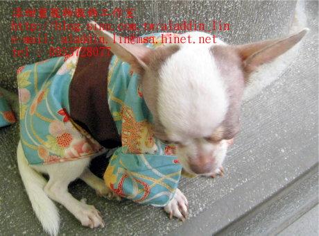 狗狗日本服09.JPG