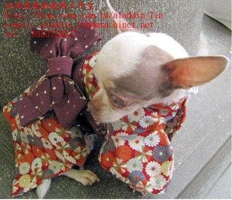 菊花圖樣狗狗日本服0b.JPG