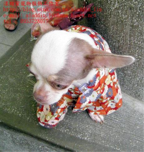 菊花圖樣狗狗日本服0c.JPG