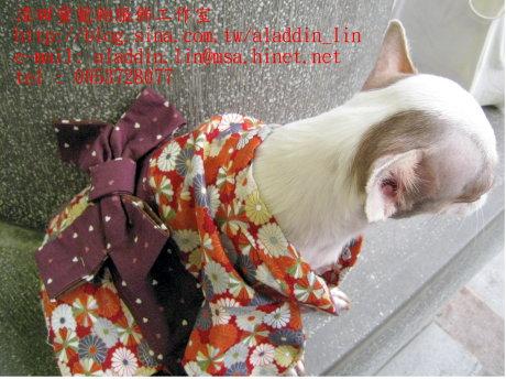 菊花圖樣狗狗日本服0d.JPG