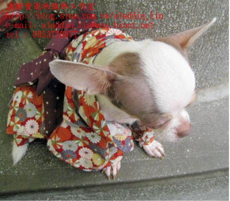 菊花圖樣狗狗日本服0e.JPG