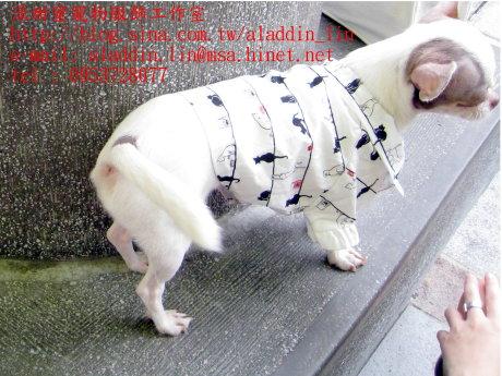 黑白貓帶領狗狗襯衫0a.JPG