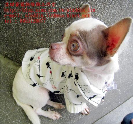 黑白貓帶領狗狗襯衫08.JPG