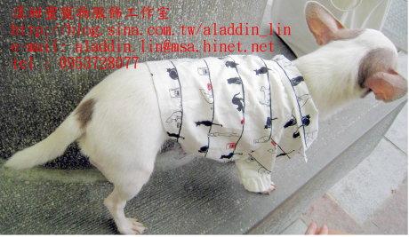 黑白貓帶領狗狗襯衫09.JPG