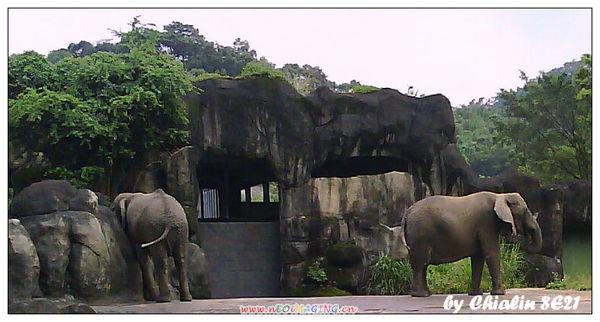 nEO_PIC00790_elephant.jpg