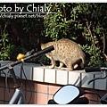曬太陽的貓