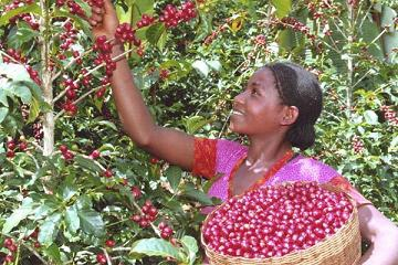 衣索比亞(18)–咖啡儀式(Buna)