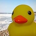 黃色小鴨 (2).jpg
