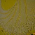Begonia Swirl (9).jpg