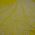 Begonia Swirl (2).jpg