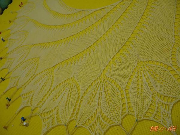 Begonia Swirl (3).jpg