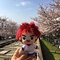 馬克vs櫻花.jpg