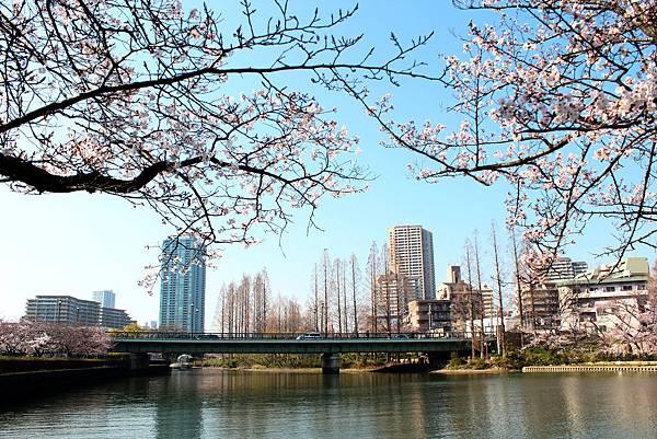 京阪自由行-day3 (532) 毛馬櫻之宮公園.JPG
