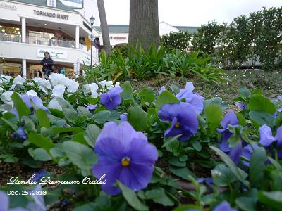 20101225_Rinku Premium Outlet_160452_lx5.jpg